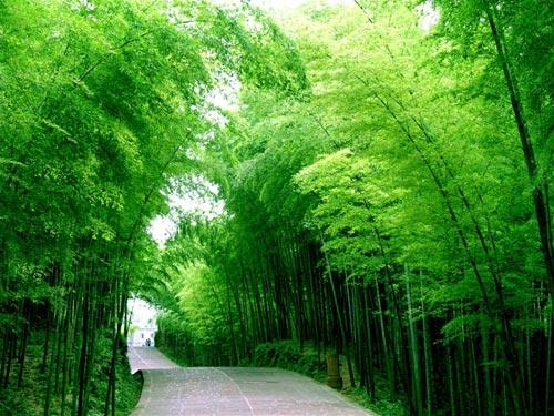 L'Albero verde, la nuova linea ecologica ed ipoallergenica distribuita da Guaber