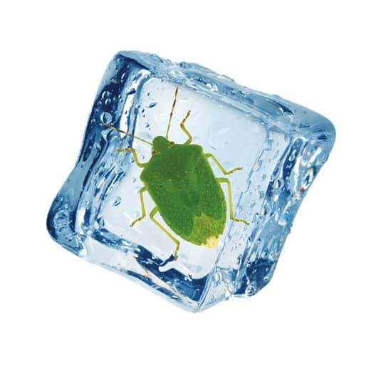 Spray Congelante Cimici Zanzarella, per eliminare col freddo gli insetti più fastidiosi