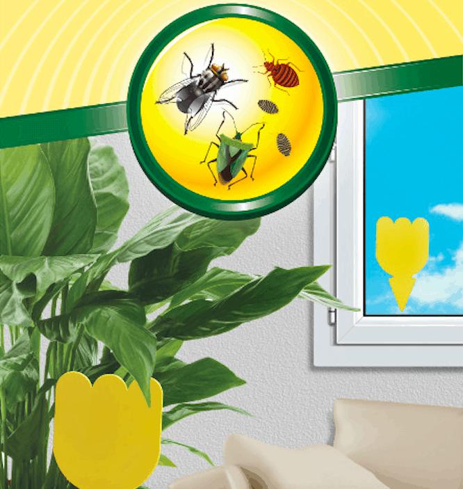 Orphea Protezione Casa aiuta a proteggere la casa dagli insetti