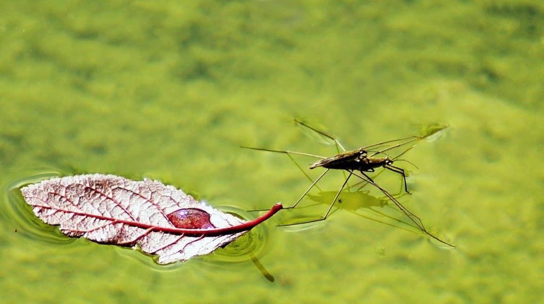 Ciao ciao zanzare ... con Zcare!